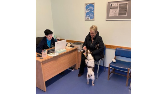 Tysul Vets Pets  Reception